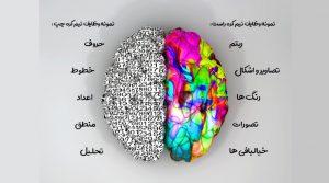 وظایف نیمکرههای مغز